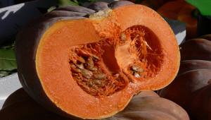 pumpkin-530-300_02